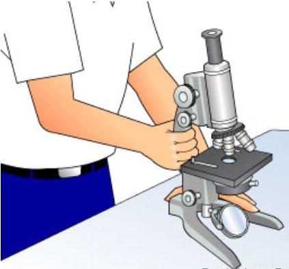 posisi membawa mikroskop